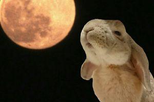 「名月をとってくれろと泣く子かな」小林一茶の俳句