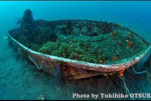 サンゴの船盛-悲しい光景