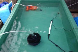 種魚水替え