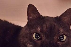 ◎多頭崩壊寸前の猫さんたち&支援にゃんたち近況◎