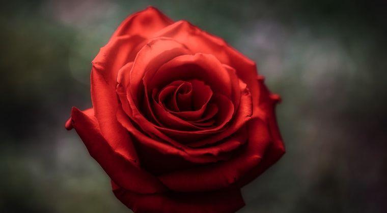 チンコの皮が余りすぎて薔薇みたいになるんやが