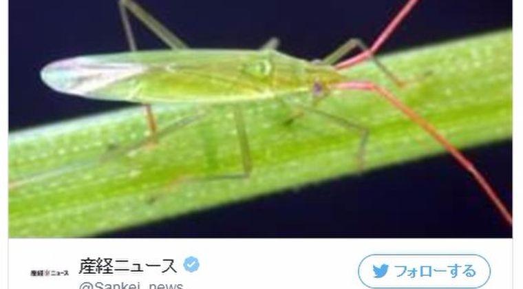 長野県で「カメムシ」が大量発生…県内全域に注意報発令