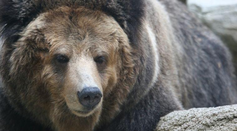 【謎】秋田県の男性「未確認生物」に襲われる…DNA鑑定の結果「クマの体毛」とは異なる獣毛を採取