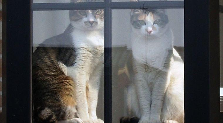 【監視】ネコは宇宙人のスパイだと考えられる「8つの理由」とは?