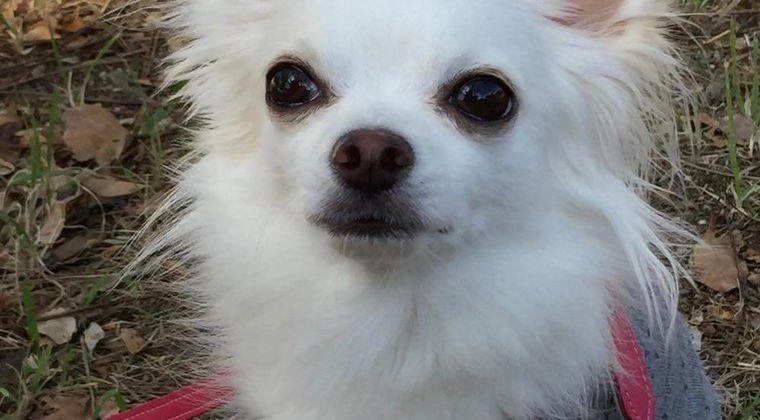 私事ですみません。お友達の「犬服オーダー専門店」の紹介です。