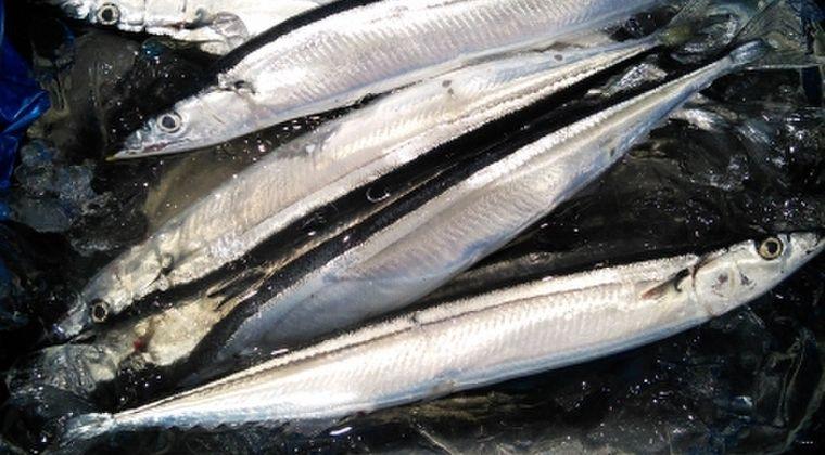【北海道】ビックリするぐらい「サンマ」が豊漁…漁師「8月にこんなにとれるの聞いたことない」