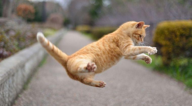 【神の使い】ネコが跨ぐと「死者」が生き返る…岐阜のとある町にある言い伝えとは?