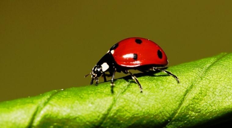 【虫】地球規模で全昆虫種の「壊滅的崩壊」が進行中であり、急激に減少している模様