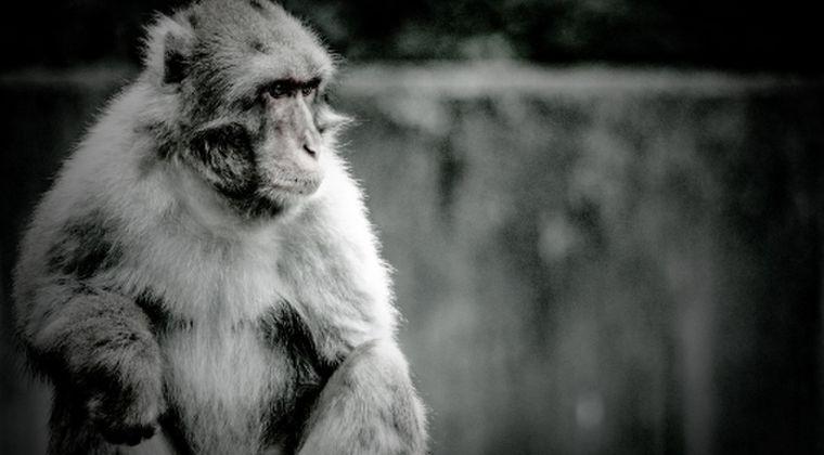 【セシウム】福島の野生「ニホンザル」に「放射性物質」の影響あり…イギリス科学誌に研究成果が相次いで報告される