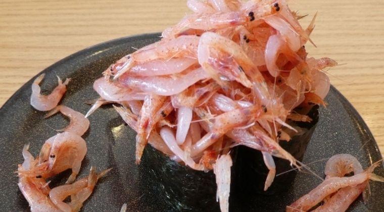 【静岡】駿河湾の「サクラエビ」が全くいない!記録的な不漁が今もなお続く…一体、どこへ消えてしまったのか?