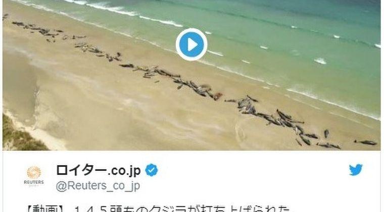 【前触れ】ニュージーランドの砂浜で「ゴンドウクジラ145頭」が座礁…ここ数日、他の3ヵ所でもクジラが浜に乗り上げているが見つかっている模様