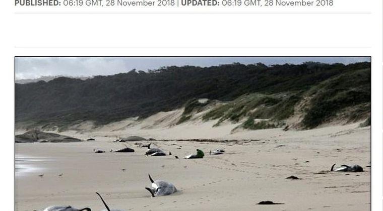【地震前兆】オーストラリア南東部の浜辺に「クジラ28頭」が打ち上げられているのが見つかる…専門家「困惑している原因は不明」