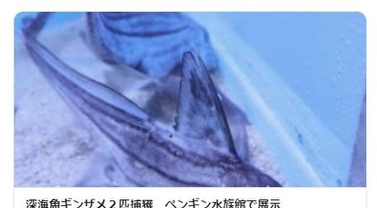 【珍しい】長崎県で深海魚「ギンザメ」2匹を生きたまま捕獲…北海道の噴火湾では「ホタテ」が原因不明の大量死