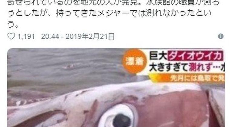 【深海魚】今度は島根県に「巨大ダイオウイカ」が漂着!デカすぎて計測できず