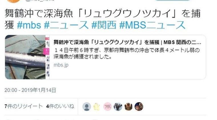 【日本海】京都の舞鶴沖で深海魚「リュウグウノツカイ」を大量捕獲…専門家「2~3日に一回は網に入っており、今年は多い」