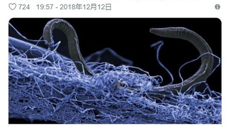 【未知】海底をおよそ2500メートル掘り下げた地下深部に広大な「生命体の森」を発見