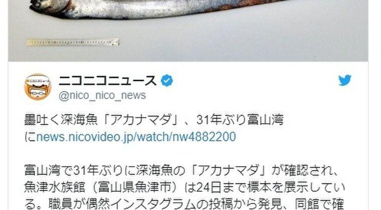 【日本海】富山湾でとても珍しい墨を吐く深海魚「アカナマダ」が発見!31年ぶりに確認される…21日にはまた「リュウグウノツカイ」も見つかっていた模様