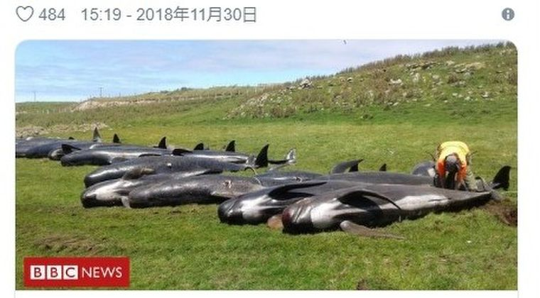 【クジラ】ニュージーランドでまたも「クジラ50頭以上」が打ち上げられる!今週に入り5例目…一方、インド洋海底から「謎の怪音」が観測され、NZなど世界各地にその異音が到達している模様