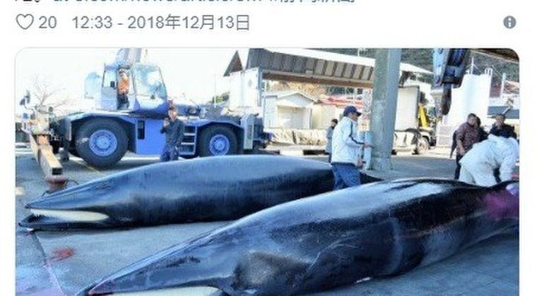 【前兆】瀬戸内海・小豆島沖で15メートルの「大型クジラ」が泳いでいるのを発見…駿河湾・静岡県沿岸では打ち上げられたり、網にかかっている「クジラ」が相次いで見つかる