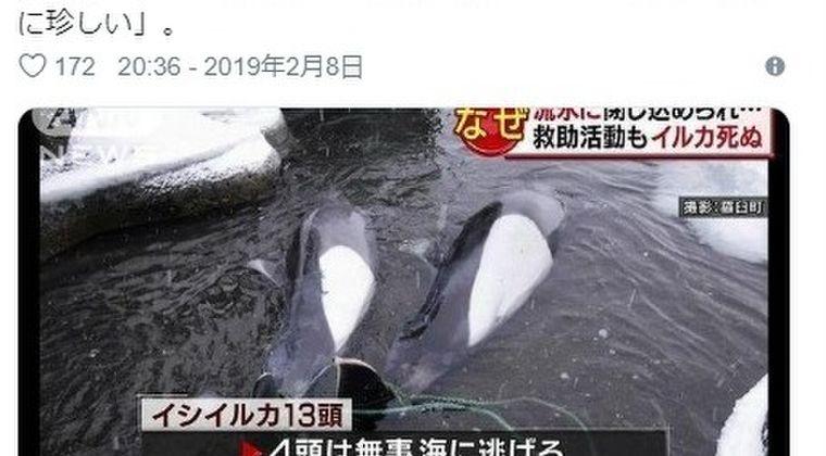 【珍しい】北海道で「イルカ40頭以上」が集団座礁…流氷に閉じ込められ9頭犠牲に