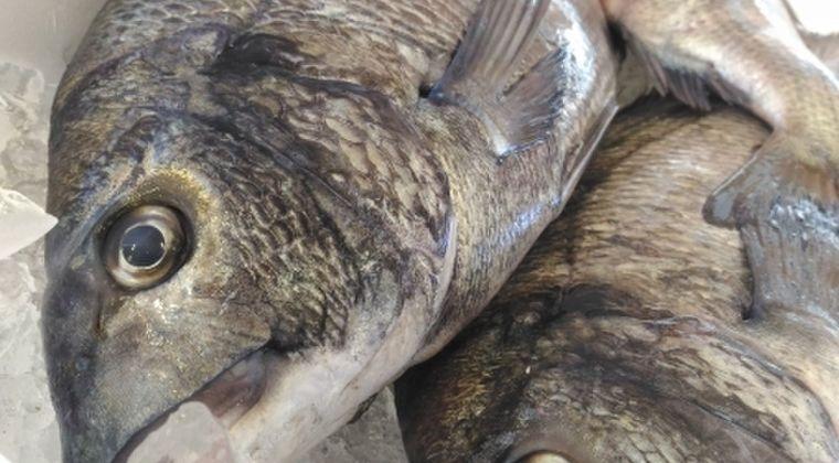 【安全性を確認】宮城県内全ての「海魚」の出荷が可能に…原発事故に伴う制限を解除
