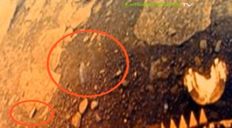 ロシアの科学者「金星探査機が撮影した写真にトカゲやサソリに近い18種類の生き物が写ってた」