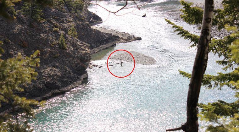【恐竜の生き残り】ネス湖のネッシーはカナダに引っ越していたぞ!カナダの国立公園の川で首長竜を激写、その画像がこちら