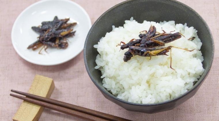 【食糧】海外だと「昆虫食」が進んでるらしいけど、お前ら食えるか?