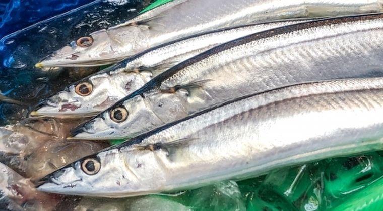 【高級魚枠】もう庶民が食べていい魚でなくなった「サンマ」…日本近海に二度と戻らないおそれあり