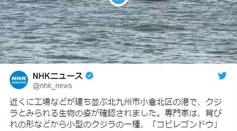【九州】福岡県の港に「クジラ」が迷い込む…「市街地近くで目撃されるのは珍しい」