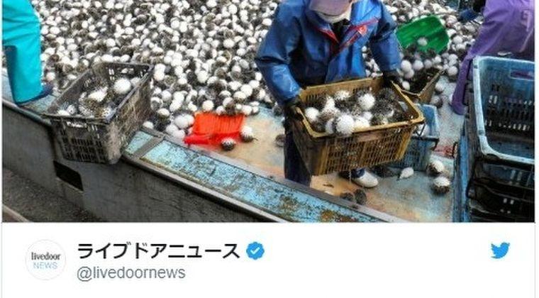 【島根】2月中旬から現れだした大量の「ハリセンボン」が定置網にかかる問題…現在4月になっても続いている模様