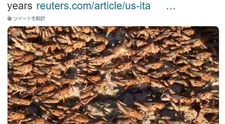 【イタリア】サルデーニャ島で「バッタ」が大量発生…過去60年で最悪の農業被害に