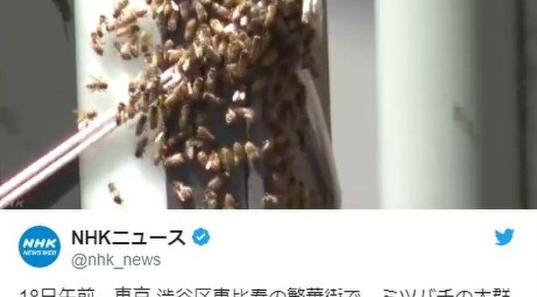 【大量発生】東京渋谷の恵比寿に大量の「ミツバチ」が飛んでいるのが目撃される!「約1万匹」近くいるとの情報も