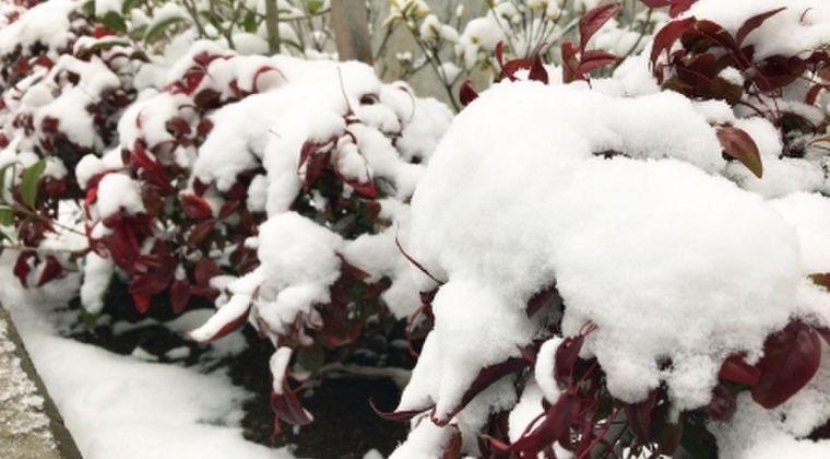 【天気】4月なのに「雪」が降る、都内でも積雪…関東北部や甲信は11日にかけても大雪のおそれ