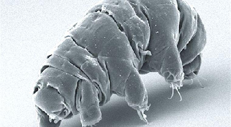 【改造】クマムシのDNAを人間に組み込み放射線の耐性を得れる計画が進行中