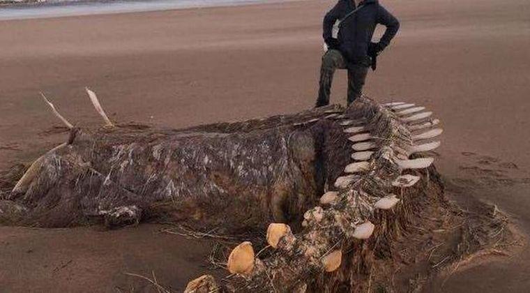 【ネッシー】スコットランドの海岸に「謎の巨大な骨」が打ち上げられているのが見つかり、海外で話題に