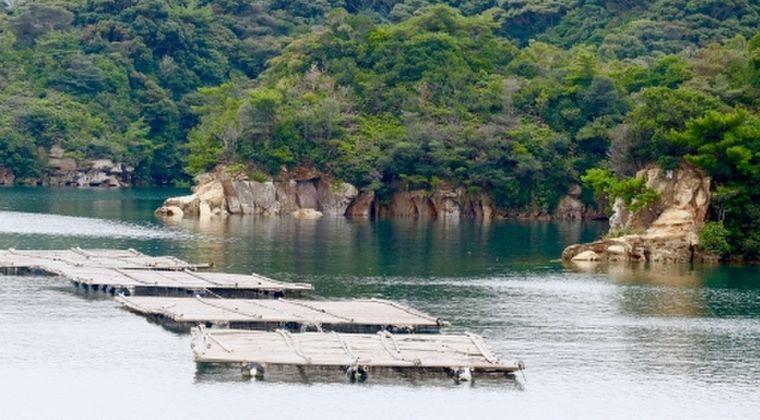 【原因不明】日本各地で「アコヤガイ」が大量死…愛媛では平年の3分の1まで減る