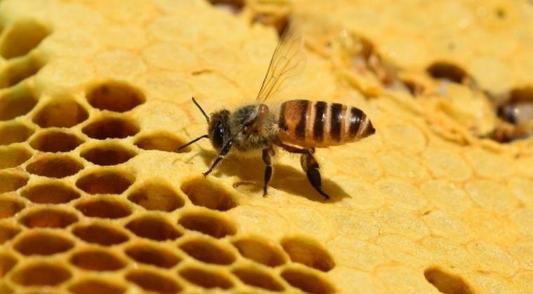 ミツバチが絶滅の危機に瀕しています…仕方ないので「スーパーミツバチ」を作製!
