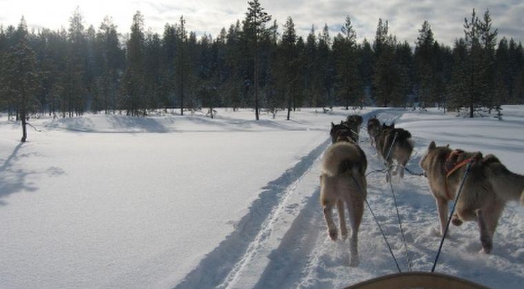 【原因不明】ノルウェーで犬に「謎の病気」が流行中…推計200匹近くが発症か