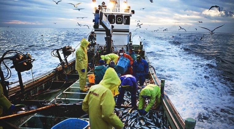 【地獄絵図】年々、漁獲量が激減している「マグロ・イカ・サケ」日本を襲う地球温暖化の影響