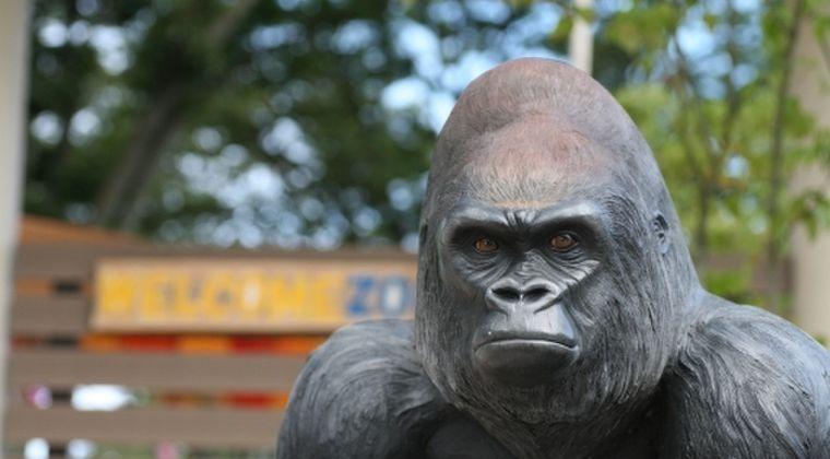 【自然破壊】IUCN(国際自然保護連合)が絶滅のおそれがある生物種「レッドリスト」に7000種以上を追加…自然は「人類史上かつてないペース」で衰退していると警鐘