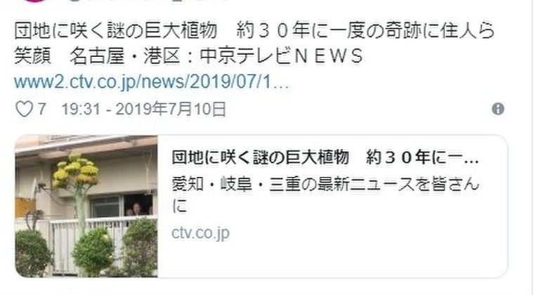 【珍しい】愛知県・名古屋の団地に植わっている「謎の巨大植物」が話題に…!約30年に1度咲くと言われている珍しい花