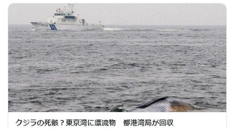 【関東】東京湾に「クジラ」漂流…都港湾局が回収