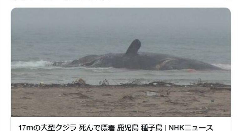【前触れ】鹿児島・種子島の海岸に17メートルの「大型クジラ」が打ち上がっているのを発見!