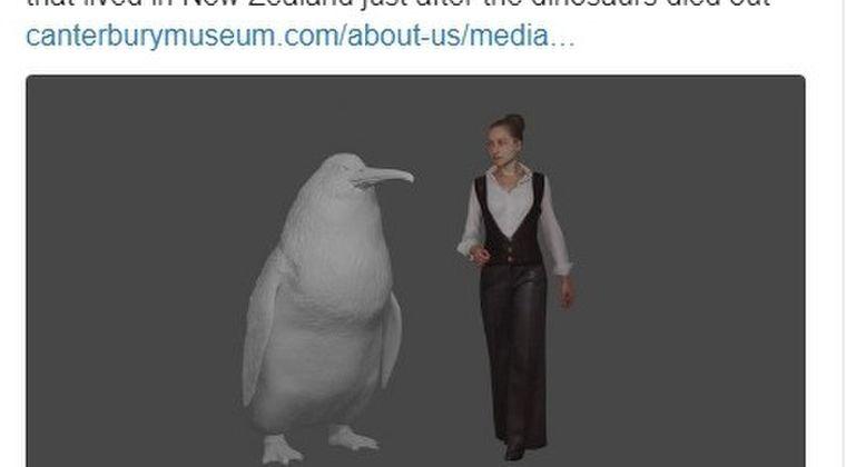 【巨大生物】昔、ペンギンはこんなにも巨大だった!ほぼ人間と同じサイズ…「身長160cm、体重80kg」その化石をニュージーランドで発見