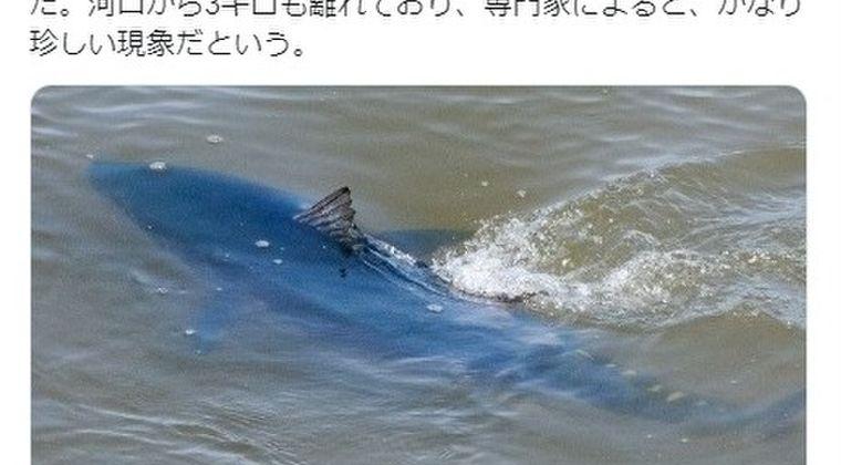 【東北】青森の川に「クロマグロ」が出現!専門家「北日本ではかなり珍しいことだ」