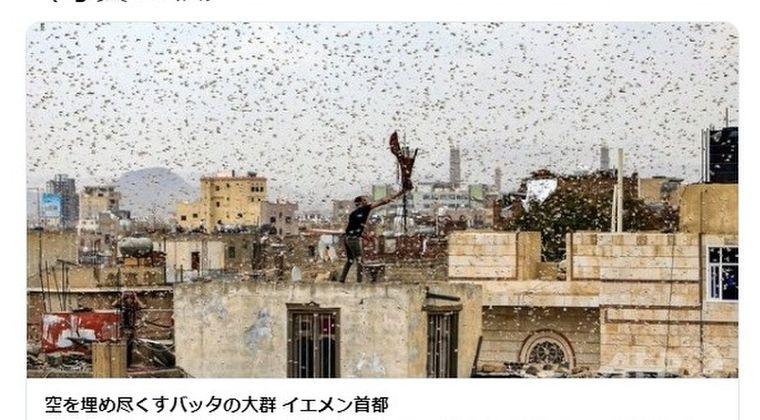 【黙示録】イエメンを「バッタ」の大群が襲う…首都サヌアでバッタが大量発生