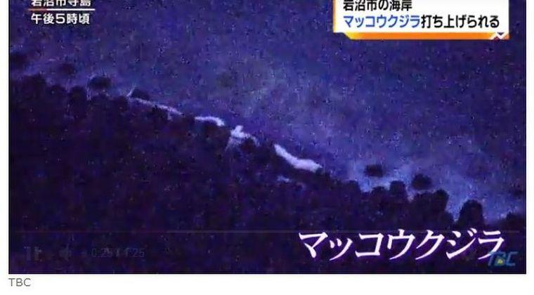 【仙台湾】宮城県の海岸に巨大な「マッコウクジラ」が漂着しているのを発見!数年に1回程度の出来事