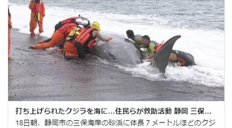 【地震前兆】静岡県の海岸に「クジラ」が打ち上がっているのを発見!