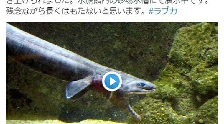 【地震前兆】和歌山県の沖合で深海サメ「ラブカ」を捕獲!
